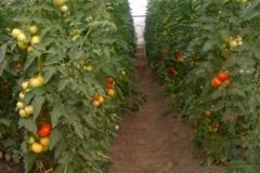 Növény termesztés